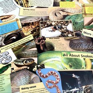 55 Piece Snake Ephemera Scrapbook Paper Bundle